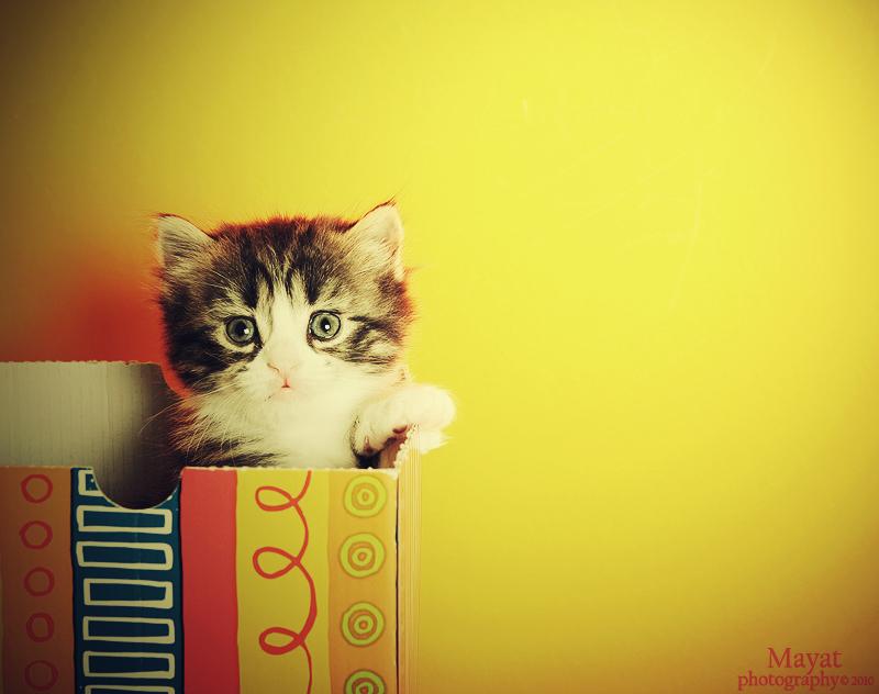 cute look Kitten 1-3 by mayat-s