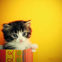 Cute look kitten 2-3 by mayat-s