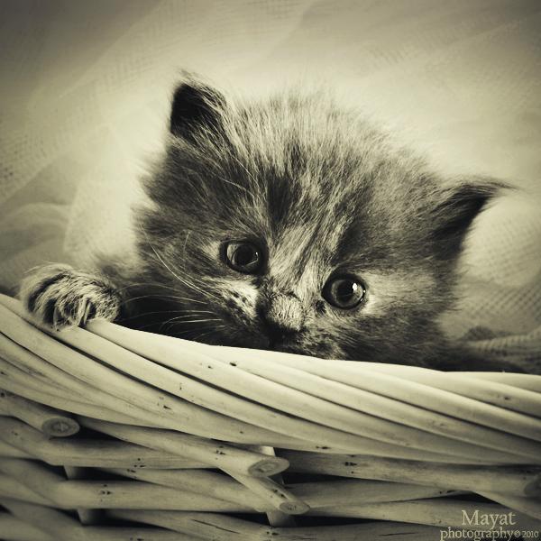.. cute look .. by mayat-s