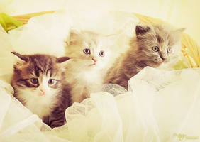 cute kittens by mayat-s