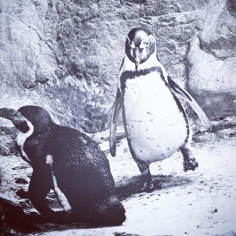 cute Penguin by mayat-s