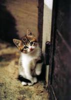 cute kitten by the-sorcress