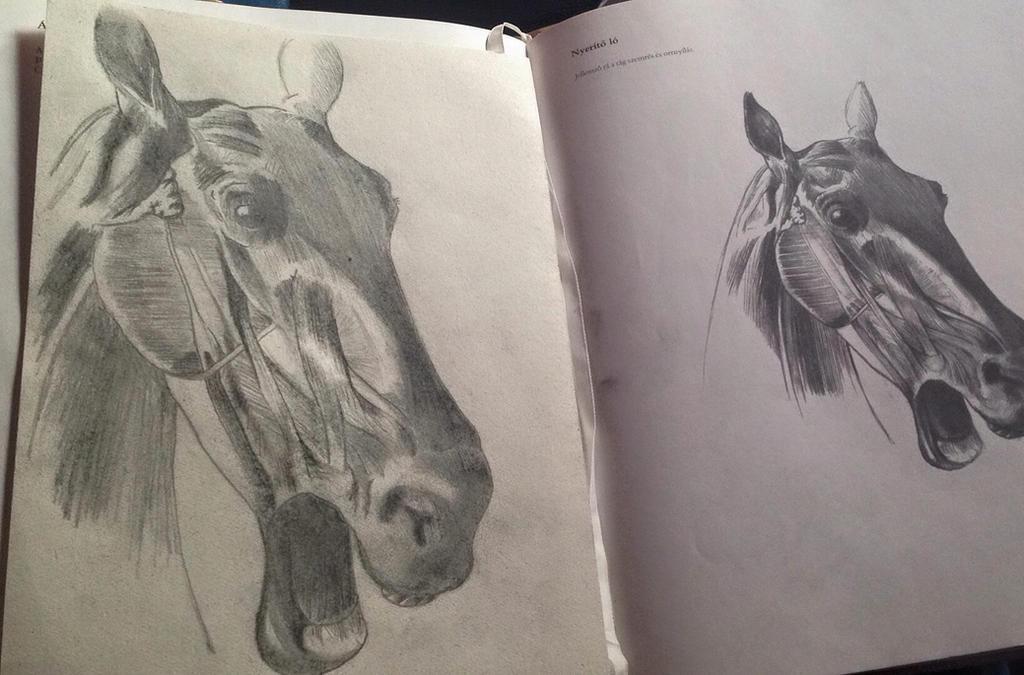 Horsehead anatomy homework by AngelGabryel on DeviantArt