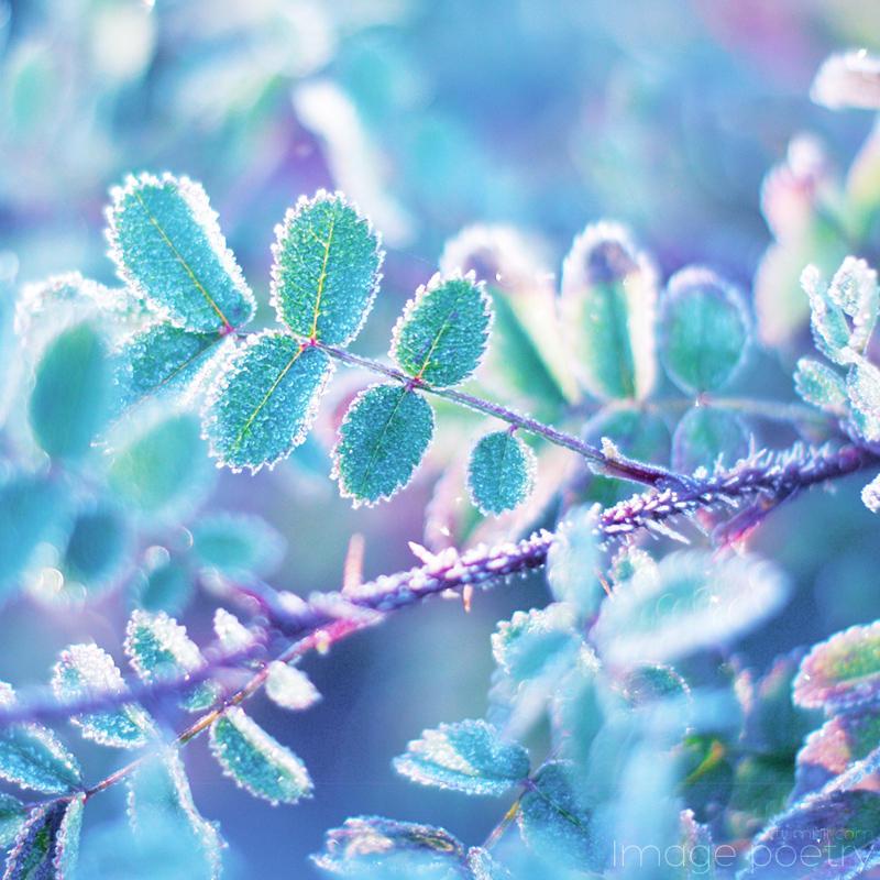 Frozen lll by akibara