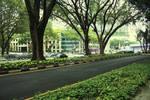 Tree+Street