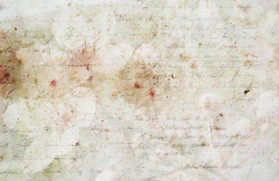 Cherry Script by HazelKeneticsStock