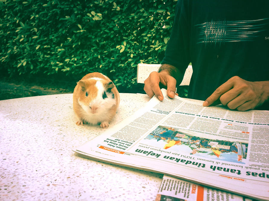 Pet Press by acaPAWN7