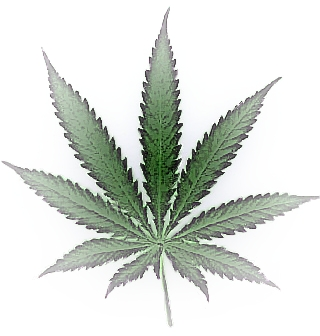 how to draw a weed leaf