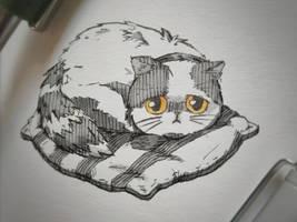Sleepy lil kitty XD by MSRaptor89