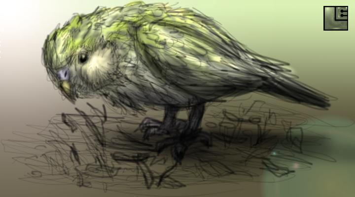 Kakapo Sketch by LE-the-Creator on deviantART