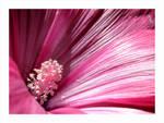 Beautiful Flower 150703