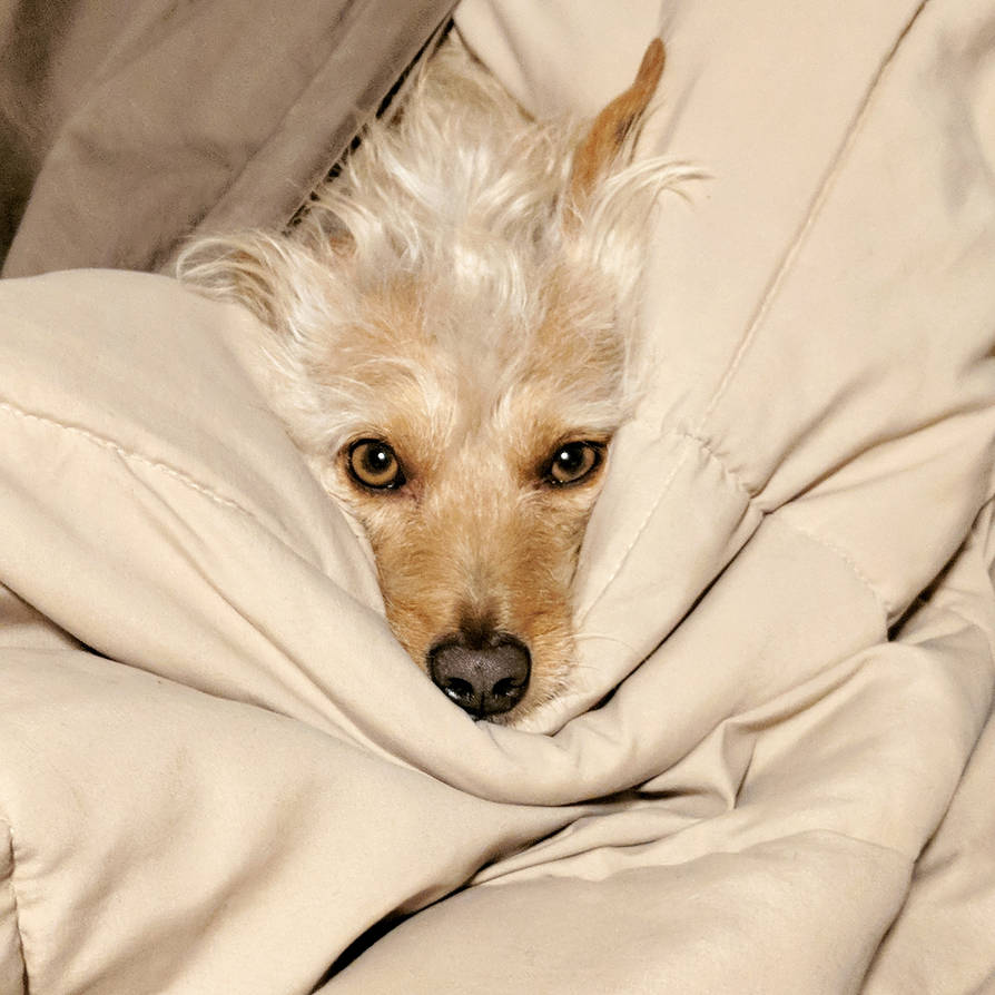 Getting Out Of Bed Is Ruff