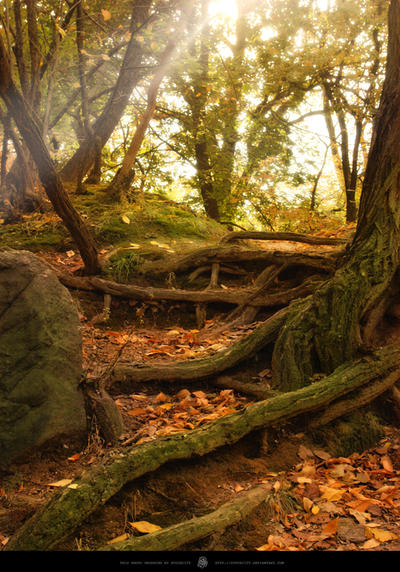 Forest - 05 by StockCity