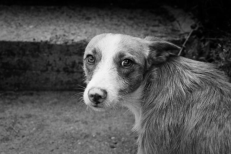 A farmer's dog II by fuxs
