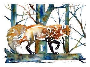Exploring Fox