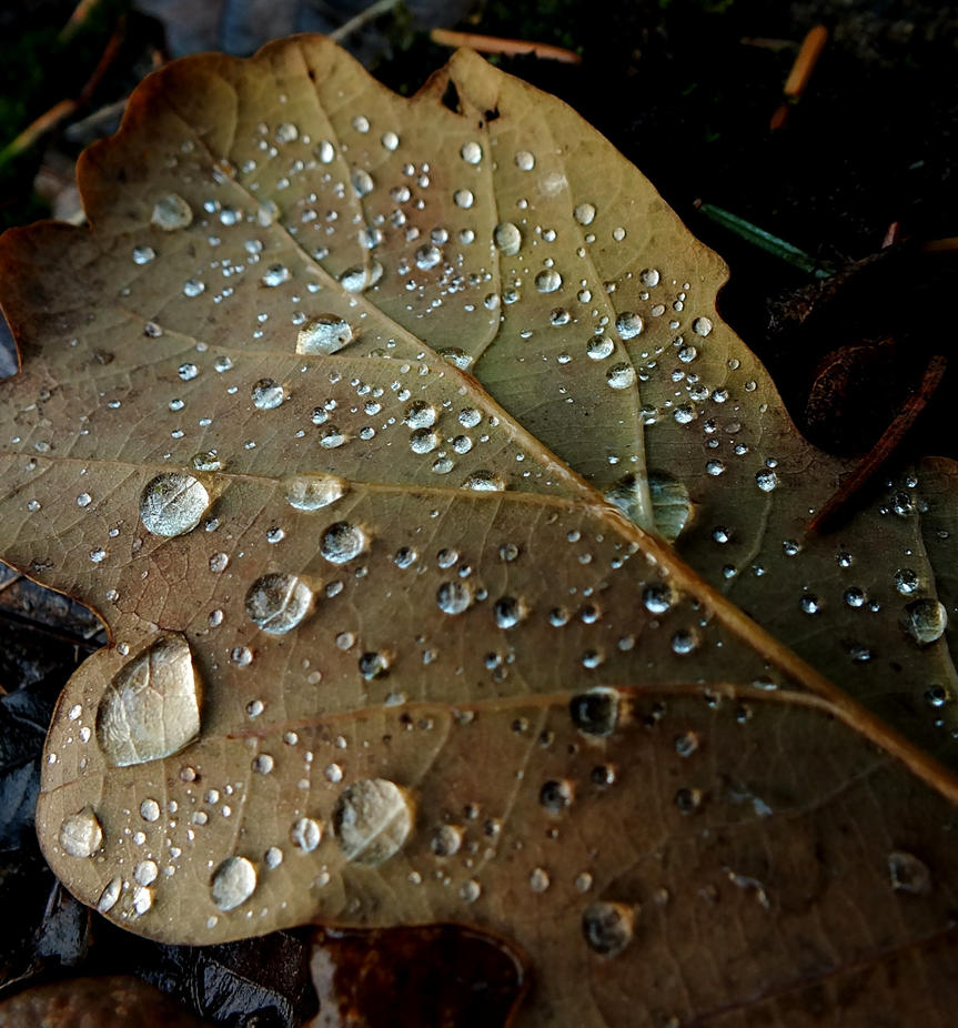 Speckled Rain by FaerieElle