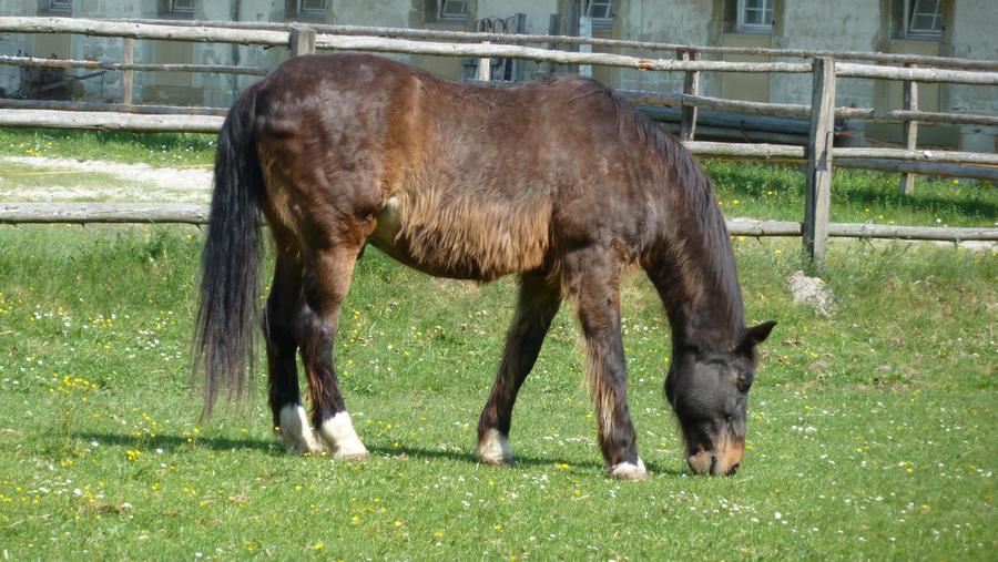 fluffy horses - photo #36