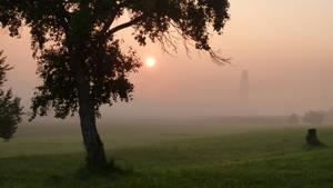 Sunrise meadow with tree 3