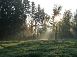 Enlighted Meadow 4 by SelvaStock