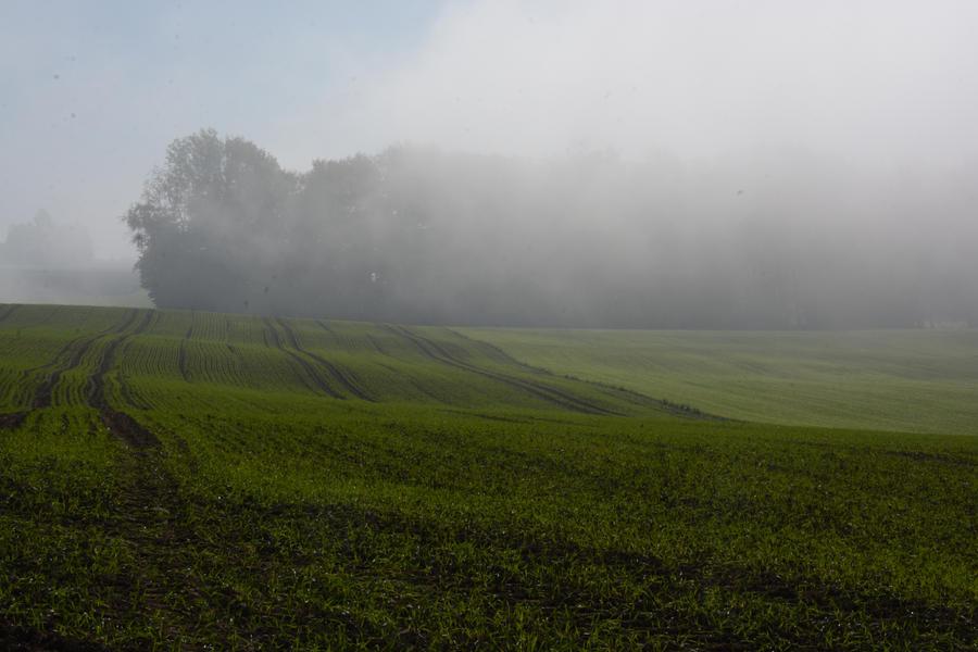 Foggy Field 2 by SelvaStock