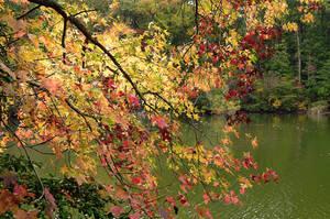 Cascade of Leaves by Poetrymann