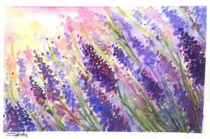Dreams of lavender