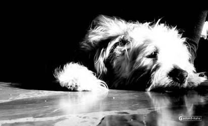 Melancholy dog :(