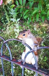 Squirrel by Gaston3-italia