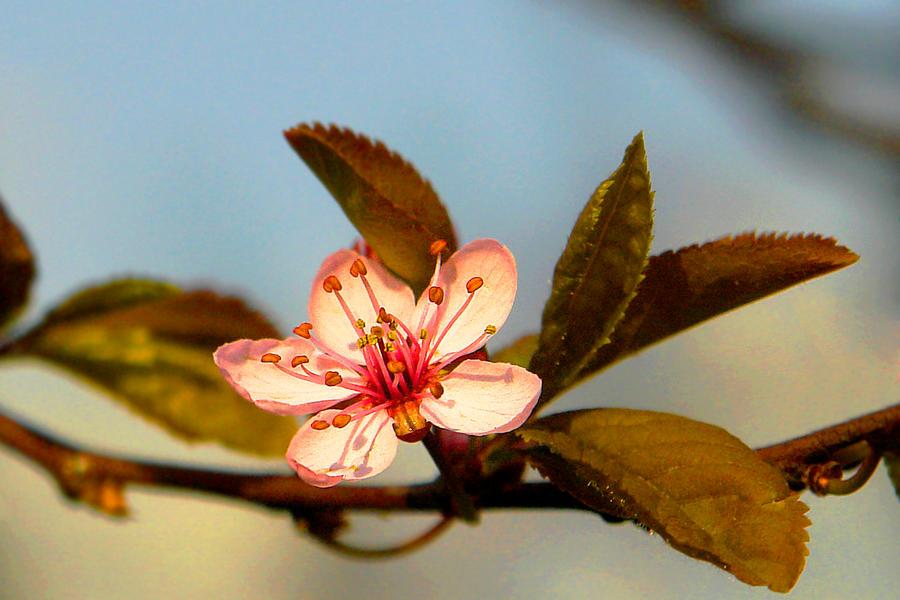 Avalon's gardens - Page 2 Like_a_flower____by_Nazareanu