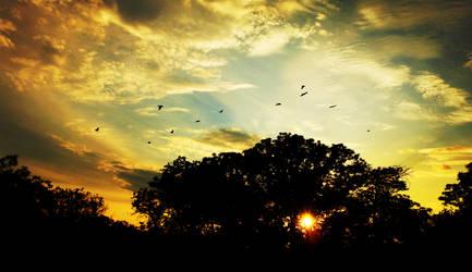 Cismigiu Sunset by Nazareanu