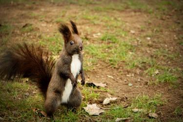 The squirrel by Nazareanu