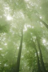 Green Heaven by Nazareanu