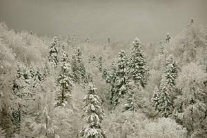 Peaceful snow