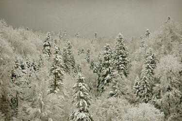 Peaceful snow by Nazareanu