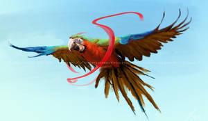 Study: Macaw by LindseyWArt