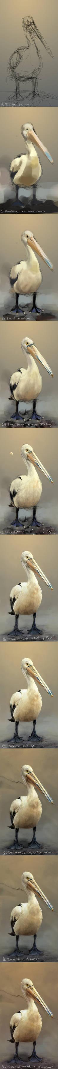 Pelican - Steps
