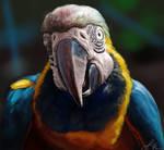 Photo Study: Macaw