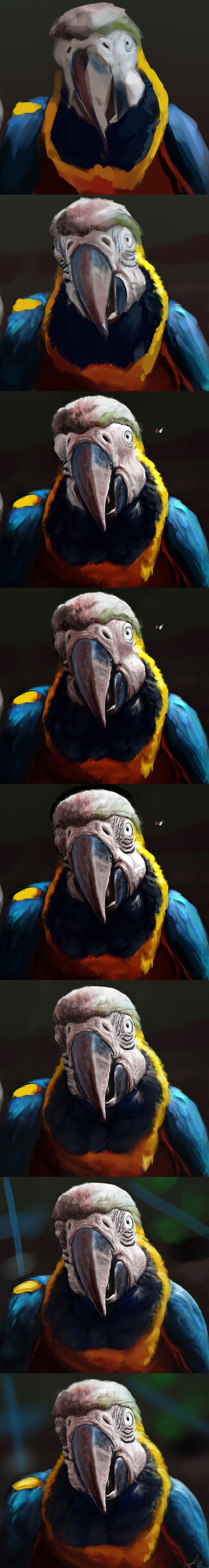 Photo Study: Macaw Steps by LindseyWArt