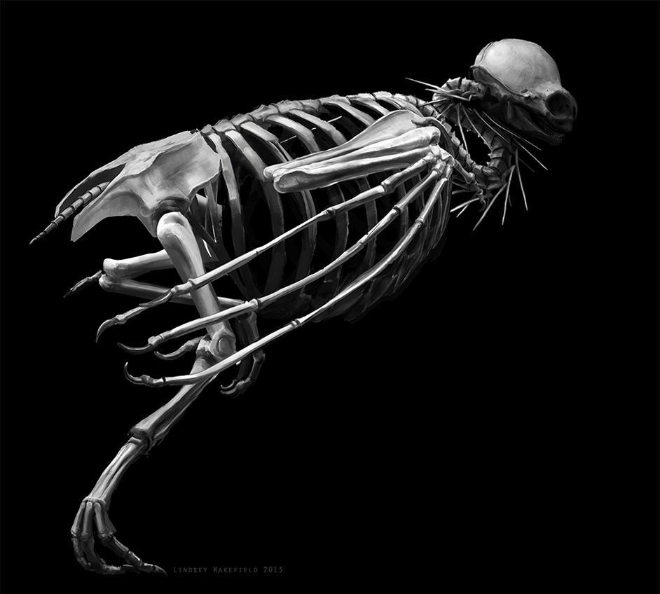 Wugu Skeleton 5 by LindseyWArt