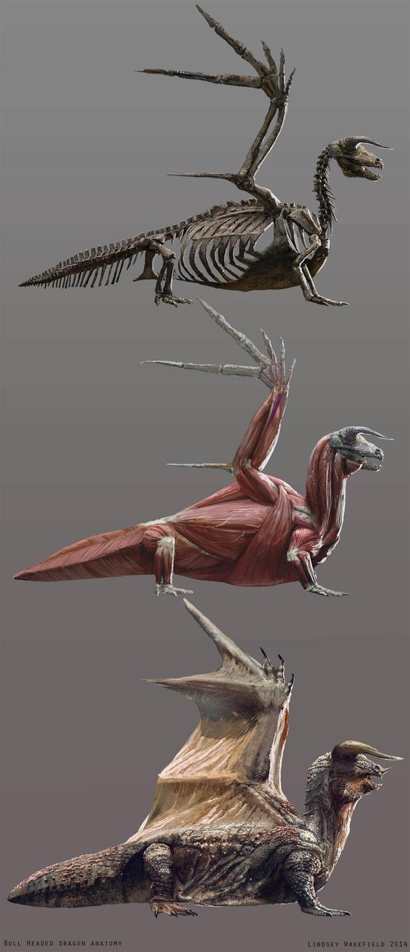Bull Headed Dragon Anatomy by LindseyWArt on DeviantArt