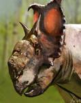Dinovember: Pachyrhinosaurus