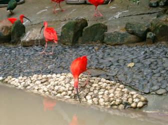 Hong Kong Ocean Park Birds by letrainfalldown