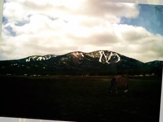 Bay Horse in Field w Mountains by letrainfalldown