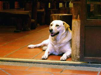 Doorway Dog by letrainfalldown
