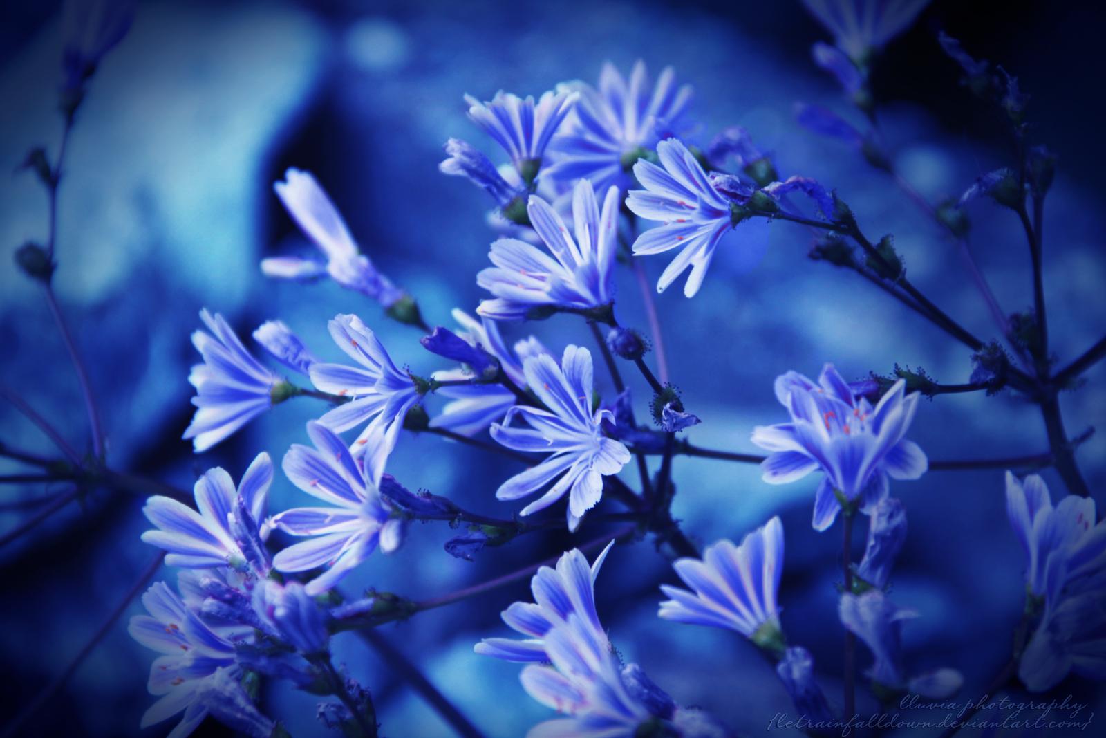something blue... by letrainfalldown