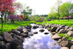Stream in the Park by angryannoyance