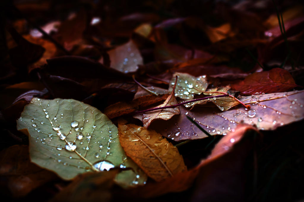 Leaves by angryannoyance