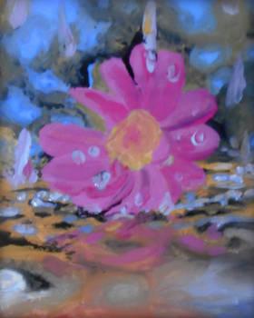 Flower-in-rainfall