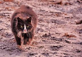 March cat Desert by LilithDarck