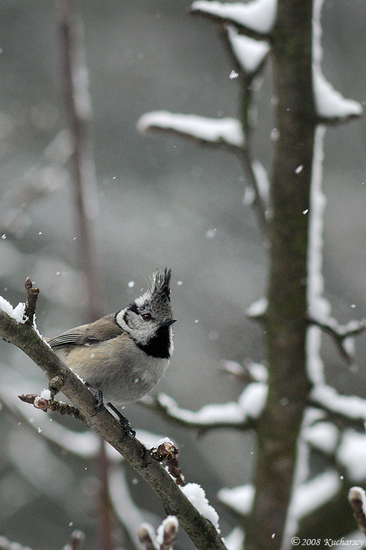 Winter in the spring III by Dark-Raptor